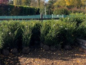 New in - Autumn hedging